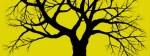 Copia (2) di albero