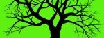 Copia di albero