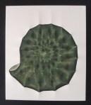 Ammonite verde