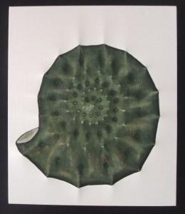 Amonite verde